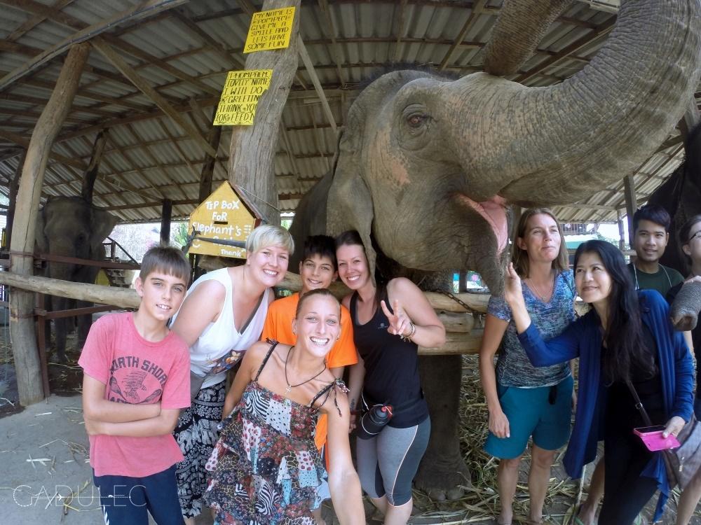 wolontariat-ze-sloniami